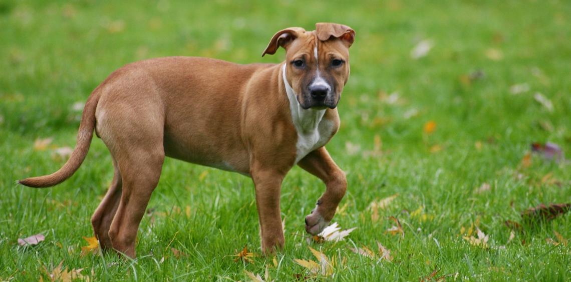 wybieg dla psów kraków lipska