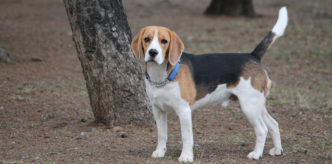 Wybieg dla psów Jastrzębie-Zdrój [PRZETARG]