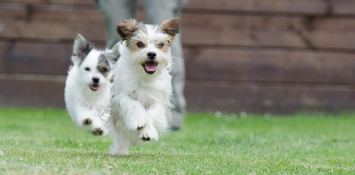 wybieg dla psów tarnów