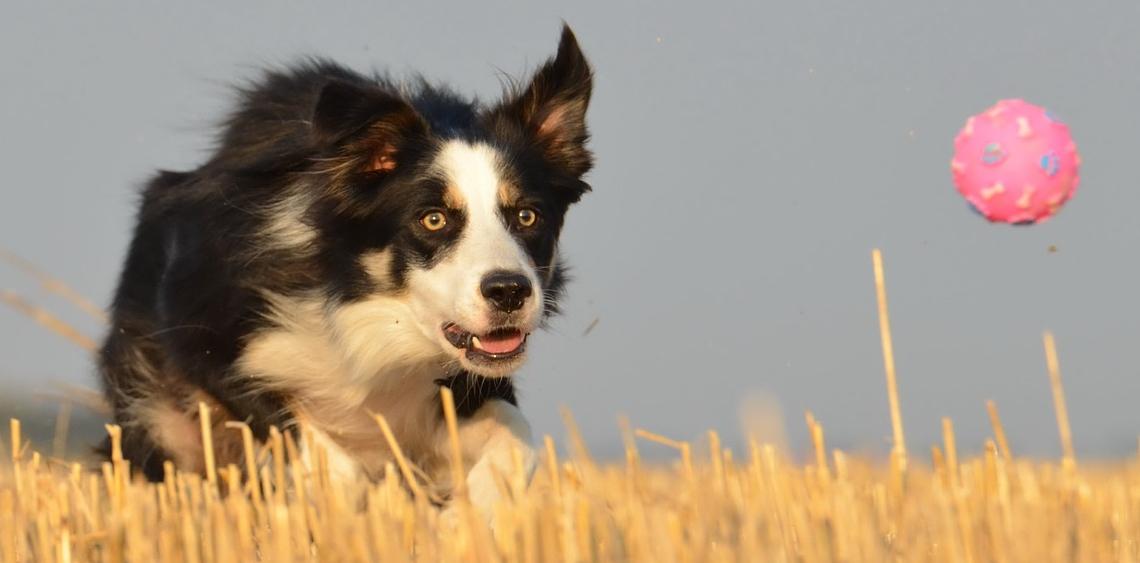 Psie konkursy dla miłośników psów