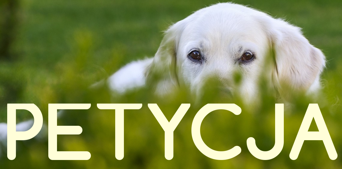 Wybieg dla psów w Białej Podlaskiej