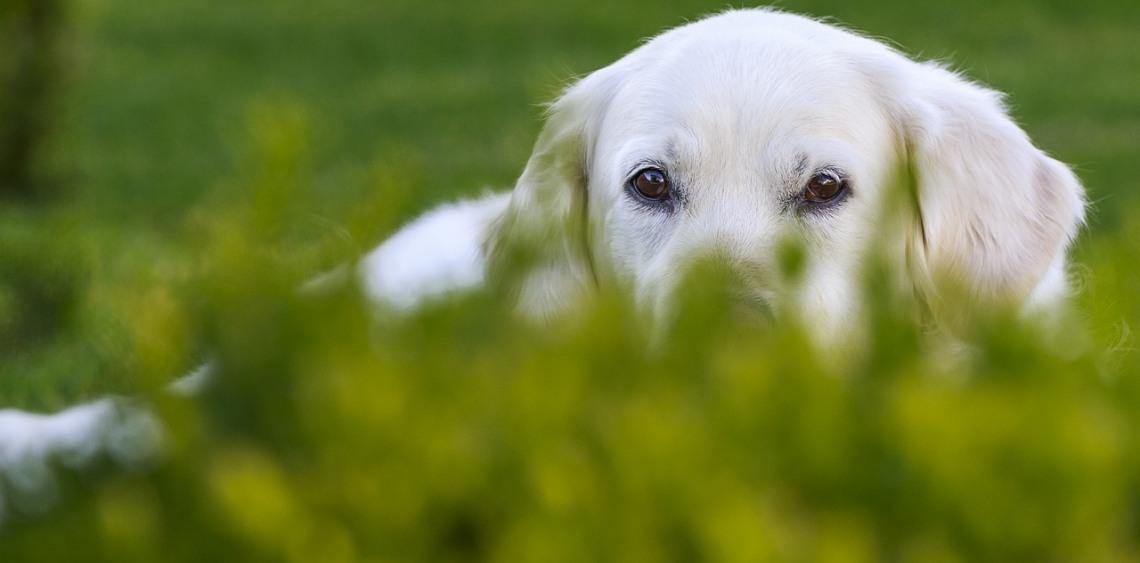 Petycja w sprawie utworzenia wybiegów dla psów w Białej Podlaskiej