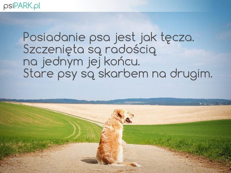 Najpiękniejsze Cytaty O Psach 1galeria Portal O Psach