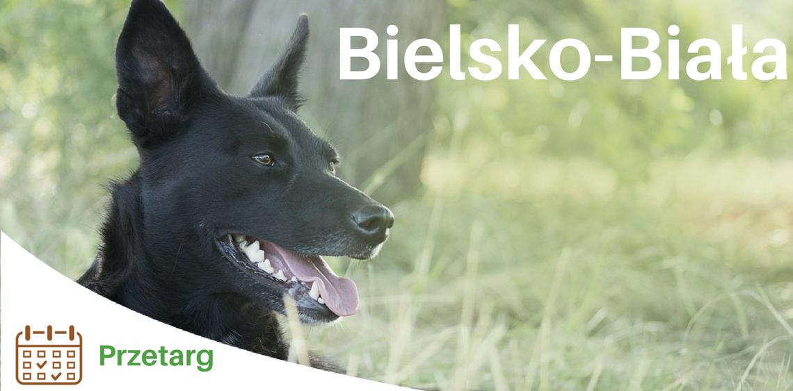 Budowa wybiegu dla psów w Bielsku-Białej przy Parku Włókniarzy [PRZETARG]