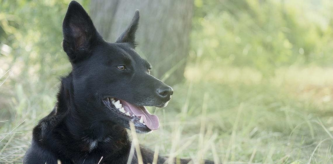 Budowa wybiegu dla psów w Bielsku-Białej