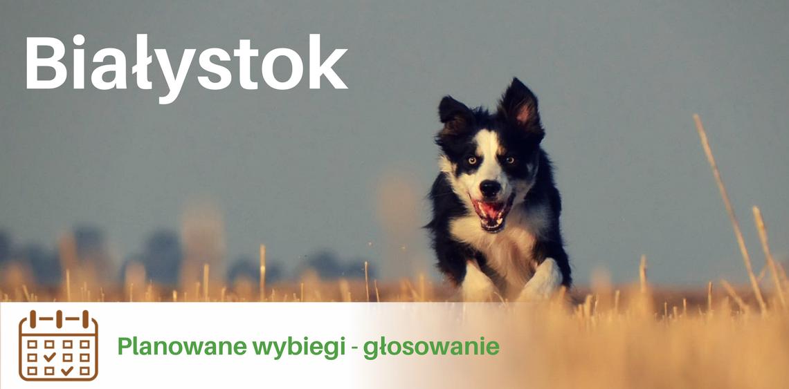 Białystok głosowanie na wybieg dla psów psiPARKpl