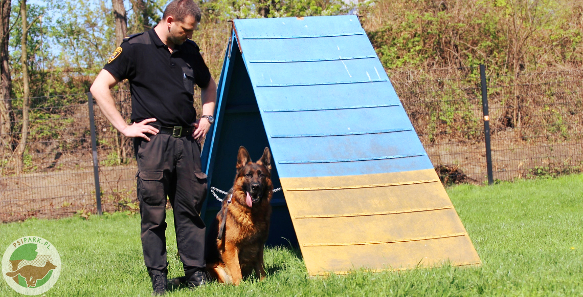 psy służbowe Straży Miejskiej w Katowicach