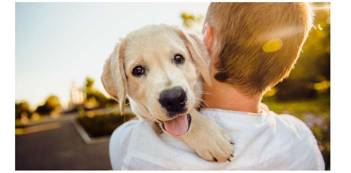 Popularne imiona dla psów