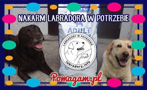 Labradory.info - wspomóż labka w potrzebie