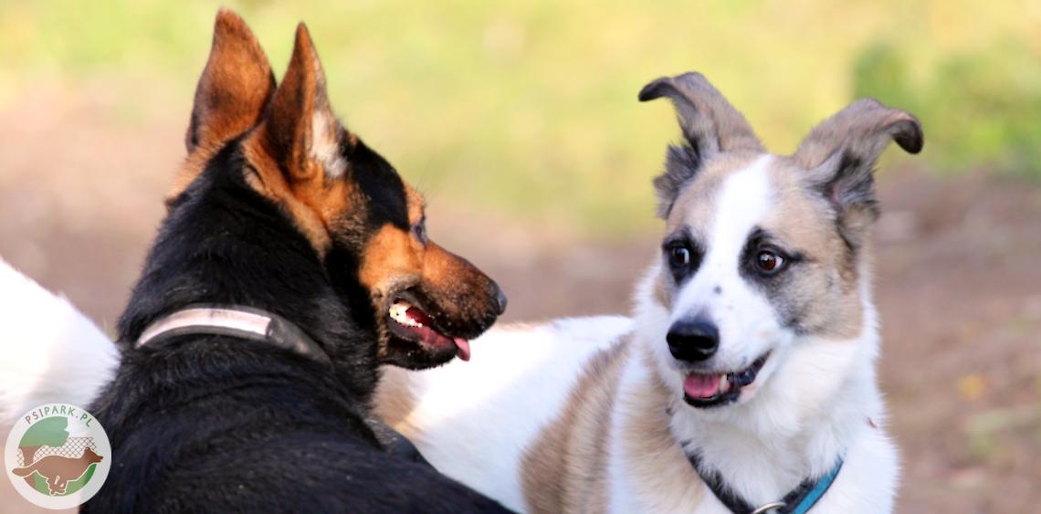 Jak zadbać o bezpieczeństwo przy wchodzeniu na wybieg dla psów
