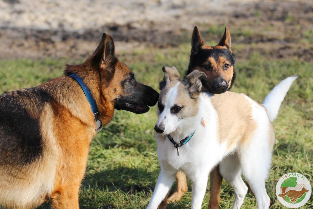 Jak zadbać o bezpieczeństwo przy wchodzeniu na wybieg dla psów?
