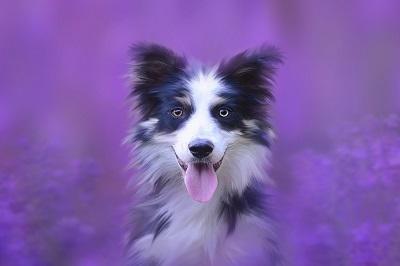 imiona dla psa