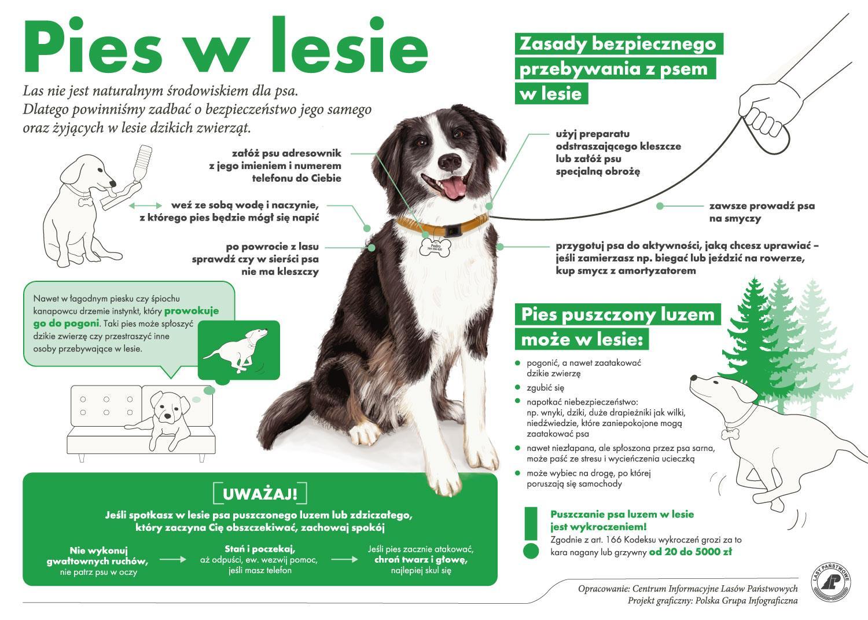 Pies w lesie - Lasy Państwowe - psiPARK.pl